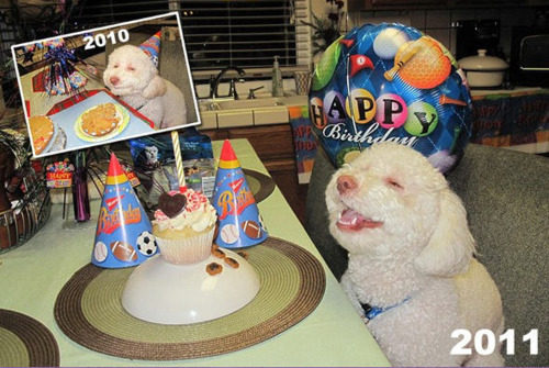 Birthday Dog Gets Better With Age